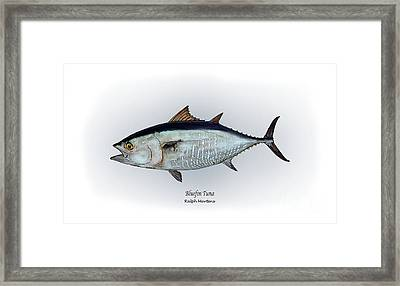 Bluefin Tuna Framed Print by Ralph Martens