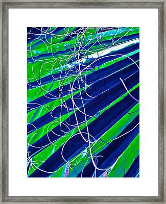 Bluegreen Palm Fun Framed Print by Gwyn Newcombe