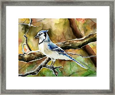 Bluejay Framed Print by Anna  Katherine