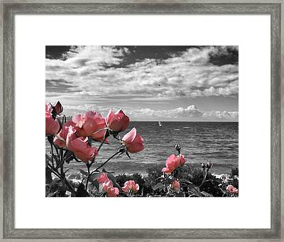 Blustery Summer's Day  Framed Print by Connie Handscomb