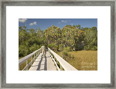 Boardwalk Through The Everglades Framed Print by Inga Spence
