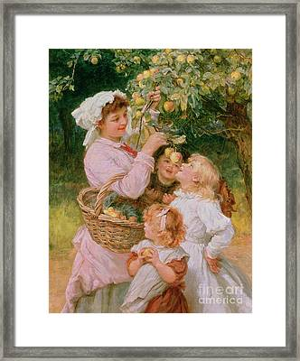 Bob Apple Framed Print by Frederick Morgan
