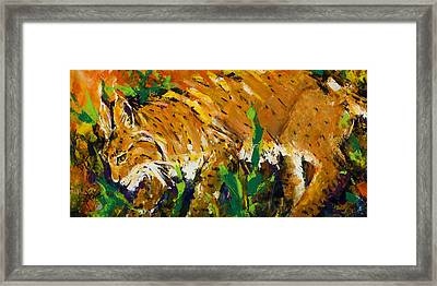 Bobcat Framed Print by Mary DuCharme