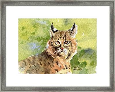Bobcat Framed Print by Mimi Boothby