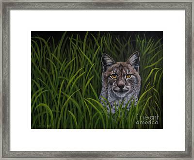 Bobcat Framed Print by Veikko Suikkanen