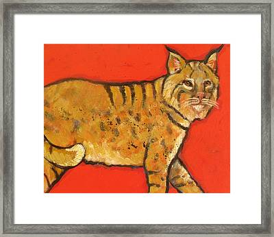 Bobcat Watching Framed Print by Carol Suzanne Niebuhr
