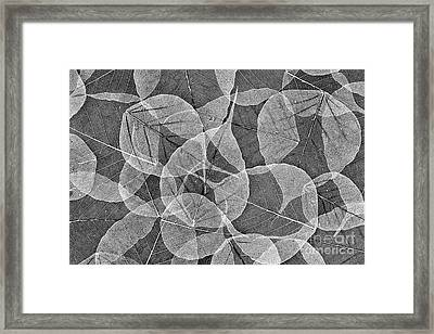 Bodhi Tree Leaves Framed Print by Tim Gainey