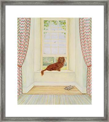 Boef Van Keulen  Framed Print by Ditz