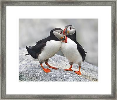 Bonded And Banded Framed Print by Tony Beck