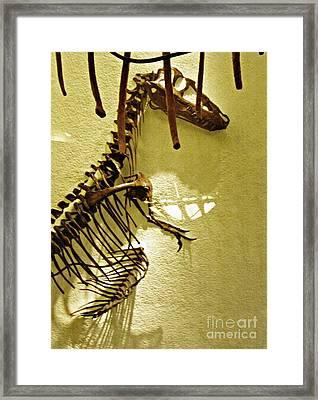 Bones Tell Stories Framed Print by Sarah Loft