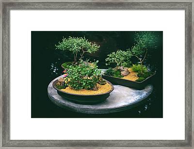 Bonsai Island Framed Print by Jessica Jenney