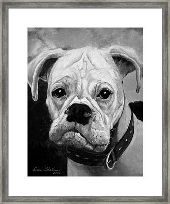 Boo The Boxer Framed Print by Enzie Shahmiri