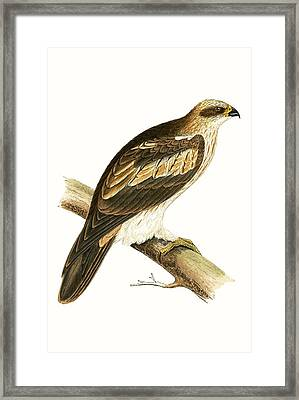 Booted Eagle Framed Print by English School