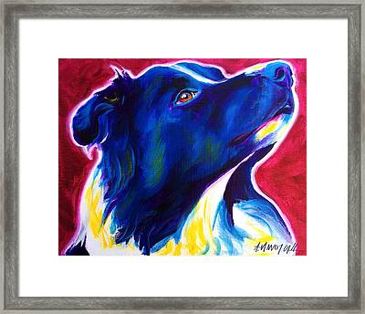 Border Collie - Bright Future Framed Print by Alicia VanNoy Call