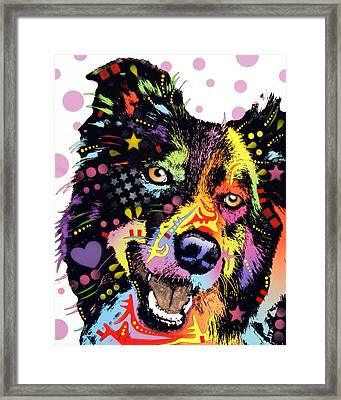 Border Collie Framed Print by Dean Russo