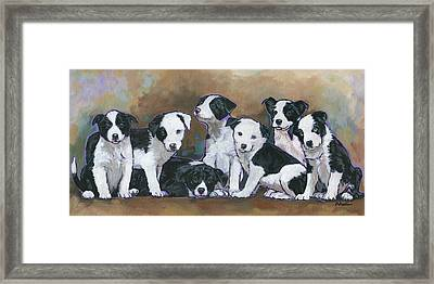 Border Collie Puppies Framed Print by Nadi Spencer