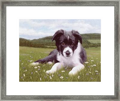 Border Collie Puppy Painting Framed Print by Rachel Stribbling