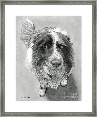 Border Collie Framed Print by Sarah Batalka