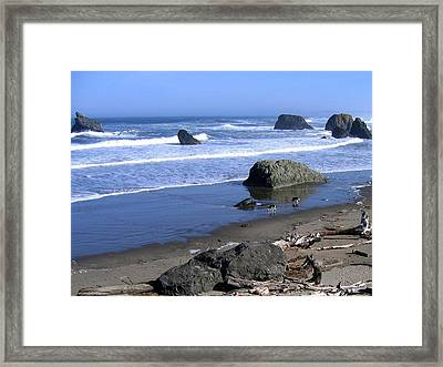 Border Collies Framed Print by Will Borden