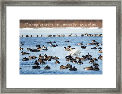 Born To Stand Out Framed Print by Bill Wakeley