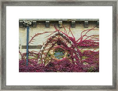 Boston Ivy At Christ Church College Framed Print by Tim Gainey
