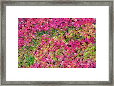 Boston Ivy In Autumn Framed Print by Tim Gainey