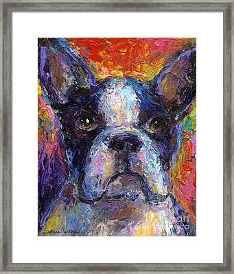 Boston Terrier Impressionistic Portrait Painting Framed Print by Svetlana Novikova