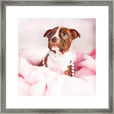 Boston Terrier Puppy In Pink Blanket Wearing Pearls Framed Print by Susan Schmitz