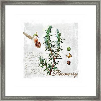 Botanical Illustration, Rosemary Herb Hummingbird Botany Framed Print by Tina Lavoie