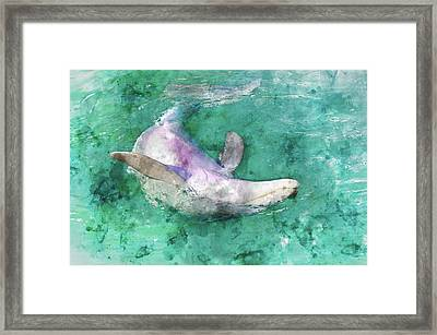 Bottle-nose Dolphin Swimming Upside Down Framed Print by Brandon Bourdages