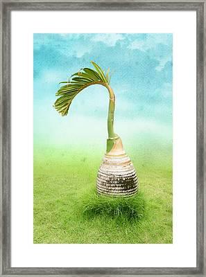 Bottle Palm Tree Framed Print by Art Spectrum