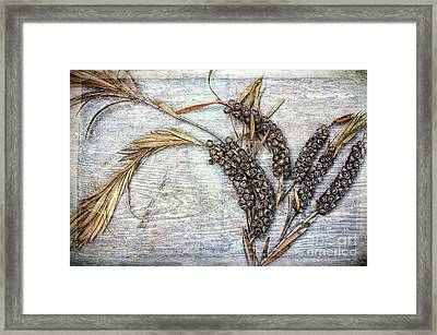 Bottlebrush Seeds Framed Print by Tim Gainey