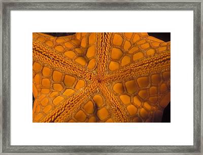 Bottom Of Orange Sea Star Or Starfish Framed Print by James Forte