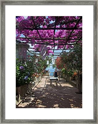 Bougainvillea Trellis Framed Print by Terry Pridemore