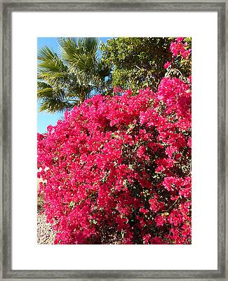 Bougainvillas 1 Framed Print by Ron Kandt