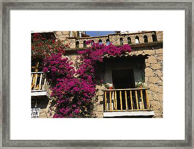 Bougainvillea Flowers On The Balcony Framed Print by Gina Martin