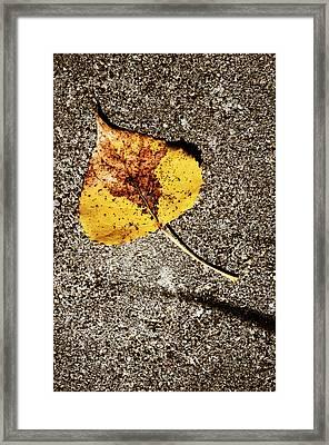 Bough Framed Print by Tom Druin