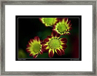 Bouquet Blooms Framed Print by Sarita Rampersad