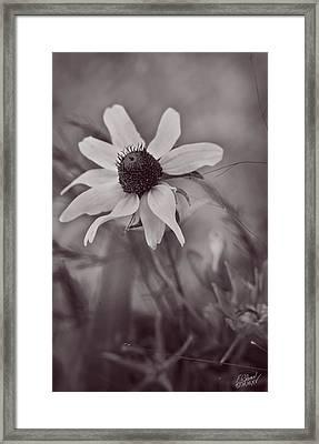 Bouquet Of One - Monochrome By Fleblanc Framed Print by F Leblanc