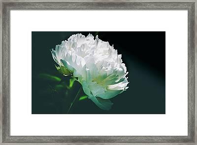 Bowl Of Cream Peony Framed Print by Julie Palencia