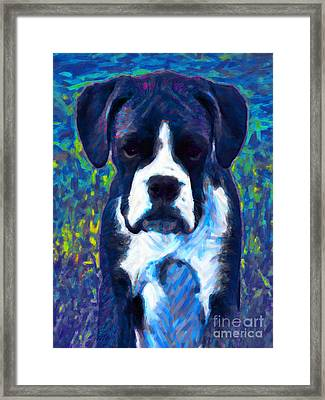 Boxer 20130126v5 Framed Print by Wingsdomain Art and Photography
