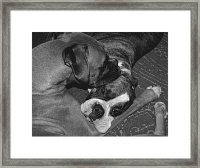 Boxer Buddies Framed Print by DigiArt Diaries by Vicky B Fuller