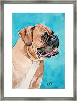 Boxer Framed Print by Christopher Shellhammer