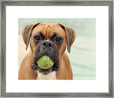 Boxer Dog Framed Print by Jody Trappe Photography