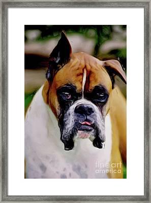 Boxer Expressions Framed Print by Laurel Sherman