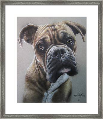 Boxer Portrait Framed Print by Jonathan Anderson
