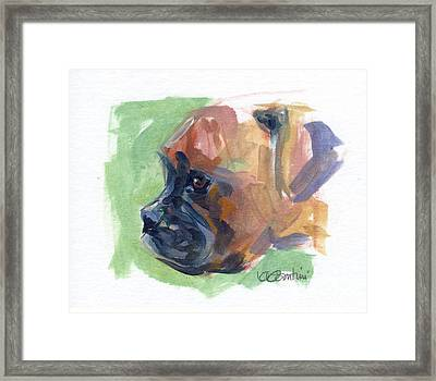 Boxer Pup Framed Print by Kimberly Santini