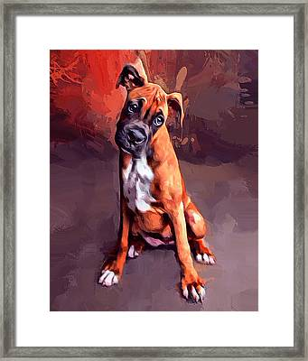 Boxer Pup Portrait  Framed Print by Scott Wallace