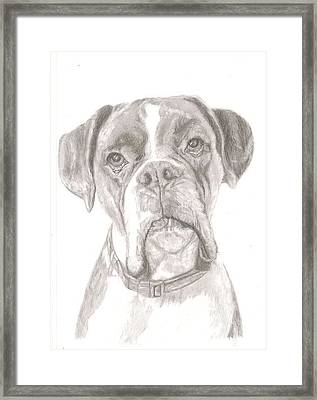 Boxer Framed Print by Rebecca Vose