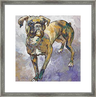 Boxer Framed Print by Sandy Tracey